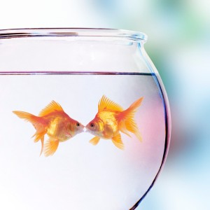 Goldfish Kissing